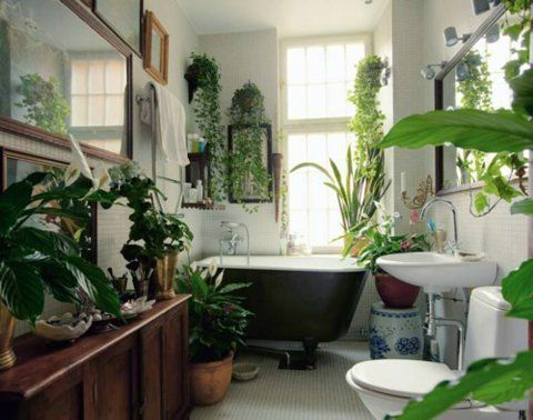 Bathroom with Plants 12