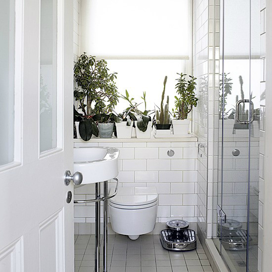 Bathroom with Plants 8