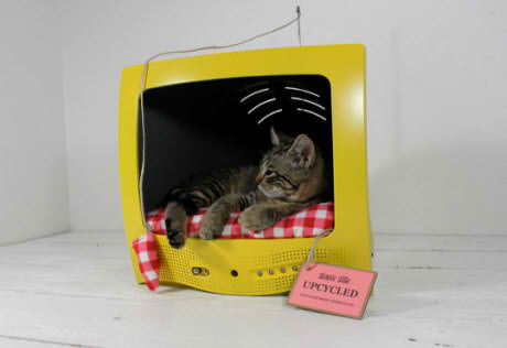 cat in recycled yellow old tv