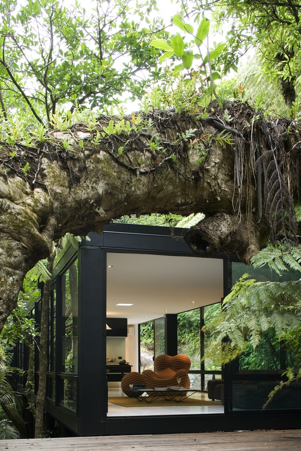 forest house in New Zealand by Chris Tates