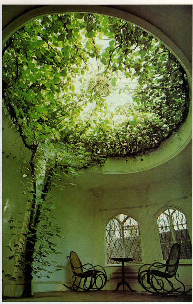 plants on glass house ceiling