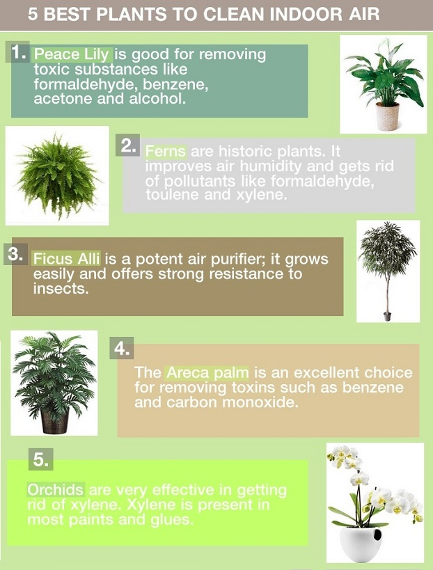 home plants that clean indoor air