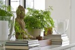 Buddha statue plant candles and books
