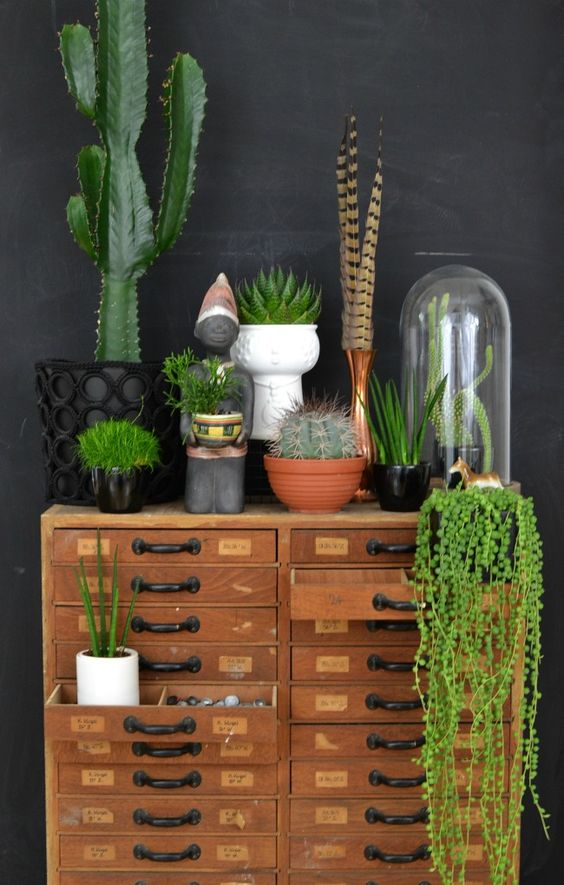 cactus interior design trend idea 2