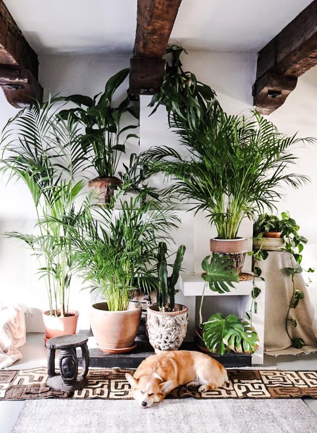 Happy Bohemian Home interior 2