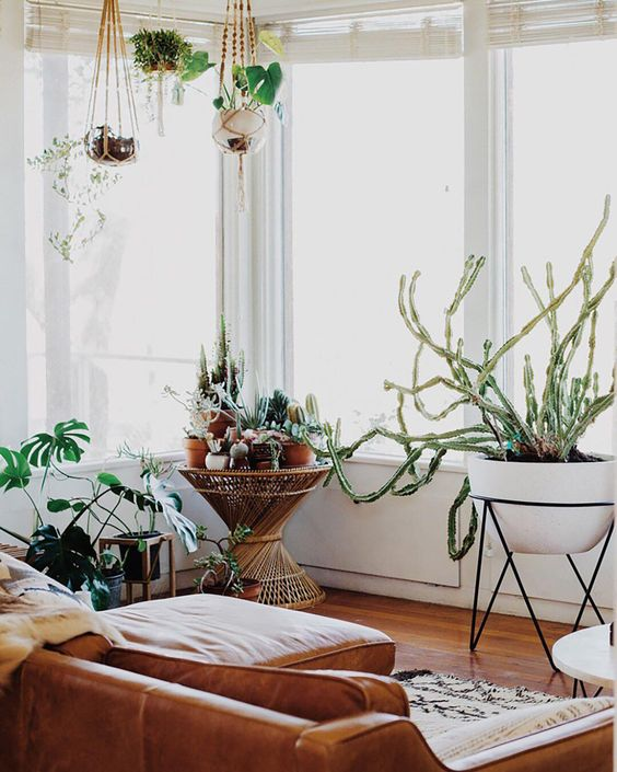 indoor plants decor 23