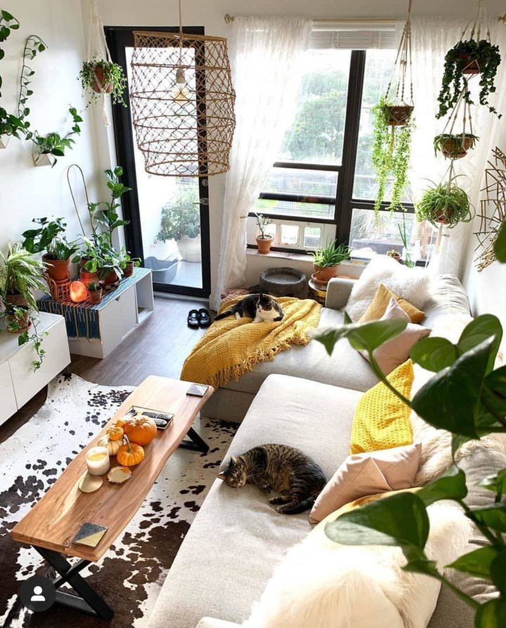 boho living room with easy care indoor plants