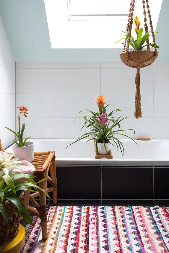 bromeliads in bathroom