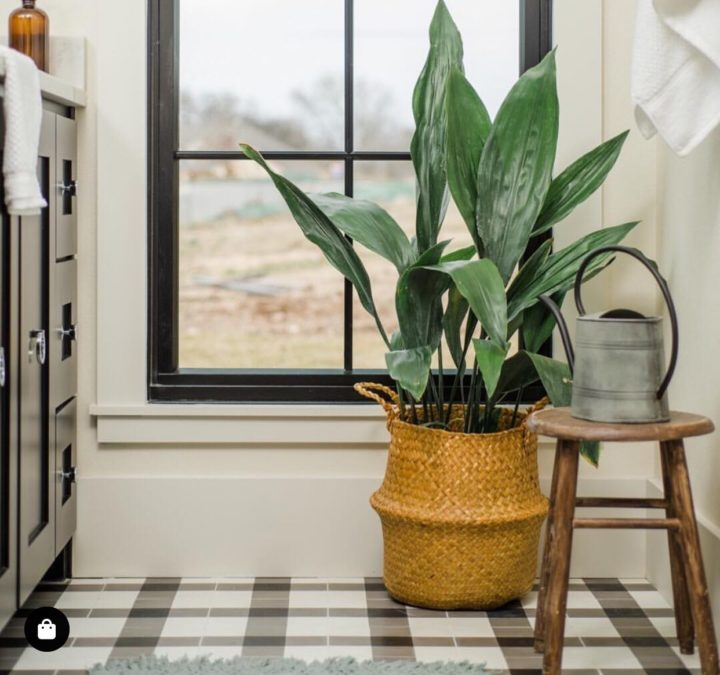 Cast-Iron Plant in bathroom