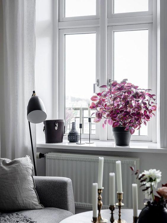 Oxalis indoor plant