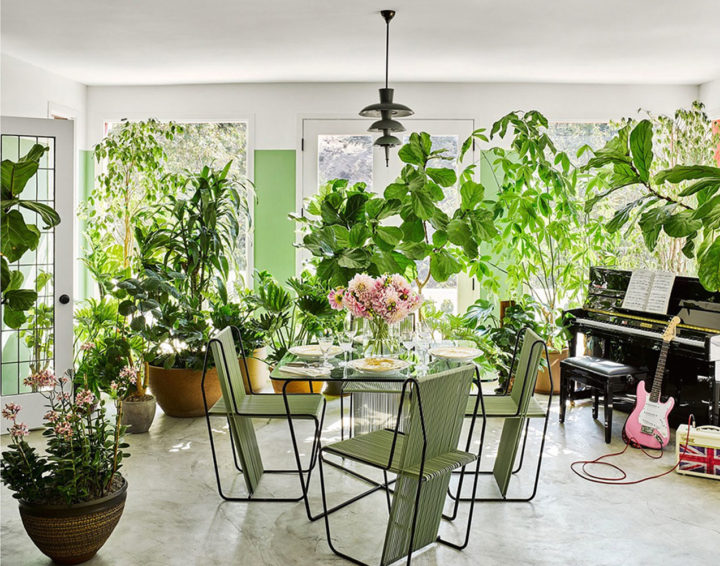 many indoor plants in Brigette Romanek's home