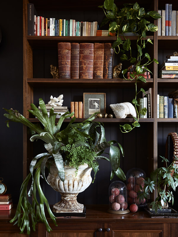 collection of thriving indoor plants
