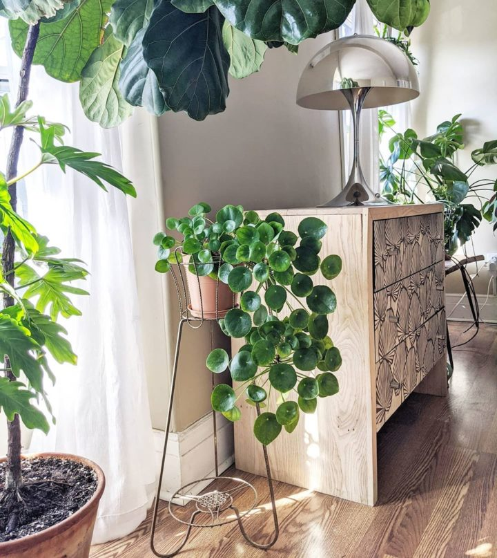 10 Lush Indoor Plants Ideas To Decorate Your Home Decoholic