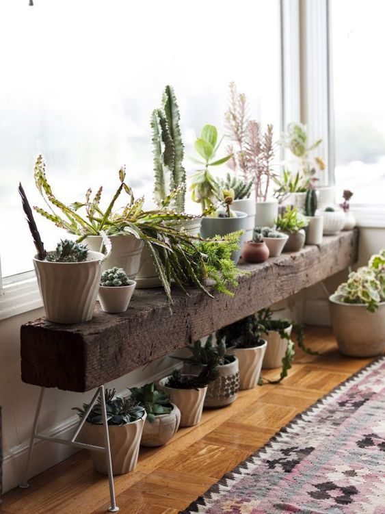 rustic reclaimed wood shelf with indoor plants under window